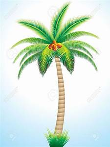 Drawn palm tree coconut tree - Pencil and in color drawn ...