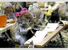 Lustige Tiere Bilder Lustige Tiere GB Pics Seite 4