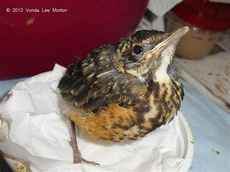 Blog Archives Laurens Wildlife Rescue