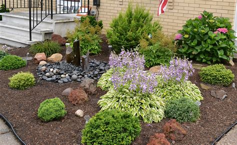 growing shrubs create low maintenance garden