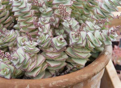 Plantes Grasses Exterieur Terrasses Et Balcon Cultiver Des Plantes Grasses Ou Succulentes