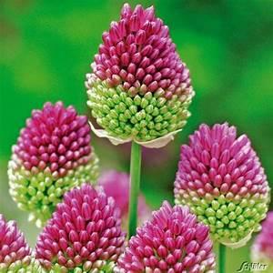 Japanische Pflanzen Winterhart : 14 besten winterharte pflanzen hardy plants bilder auf ~ Michelbontemps.com Haus und Dekorationen