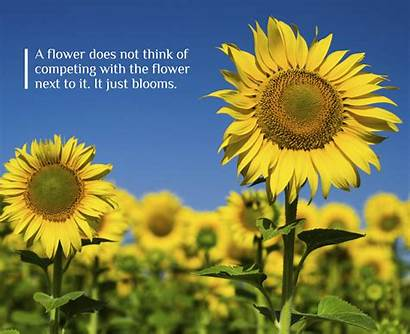 Inspirational Quote Blooms Flower Recovery Tweet
