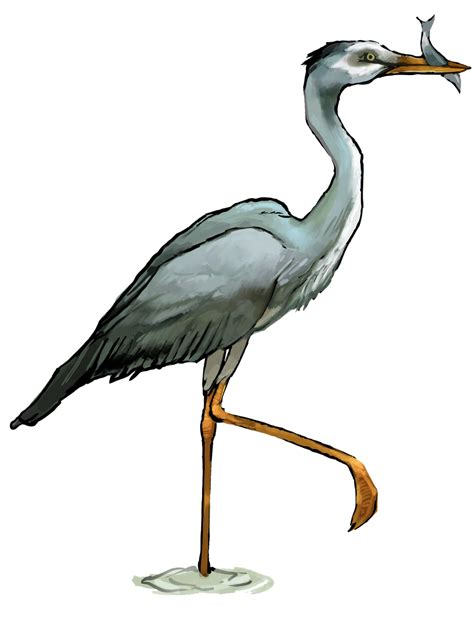 clipart free images heron clipart clipground