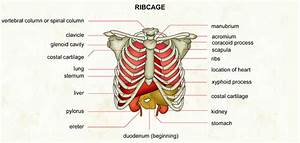 Causes Of Pain Under Right Rib Cage