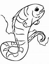 Eel Electric Coloring Pages Moray Wolf Drawing Piranha Getcolorings Eels Printable Gulper Getdrawings Popular Colorings sketch template