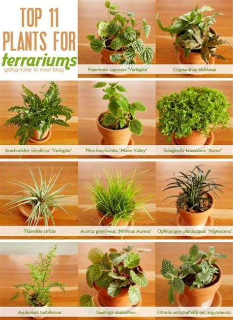 best plants for closed terrarium what are good plants for a closed terrarium quora