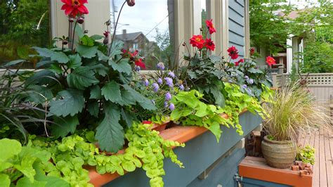 windowsill sunset garden