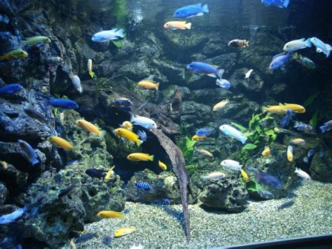 aquarium poisson de fond fonds d 233 cran animaux gt fonds d 233 cran vie marine poissons aquarium par marieclaire hebus