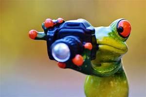 Frosch Bilder Lustig : kostenloses foto fotograf frosch lustig kamera kostenloses bild auf pixabay 1080008 ~ Whattoseeinmadrid.com Haus und Dekorationen
