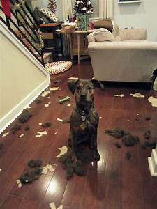 These Dogs Made A Huge Mess