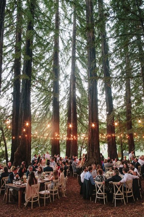 25 Best Ideas About Lighted Trees On Pinterest Potted