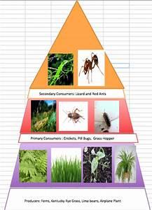 Ecology Pyramid
