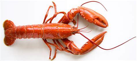 comment cuisiner a la vapeur le homard cuisine à l 39 ouest