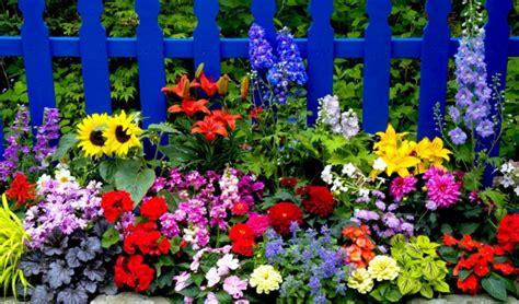Sommerblumen, Welche Die Hitze Besonders Gut überstehen Können