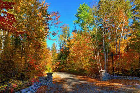 Fotos gratis : paisaje árbol naturaleza bosque camino