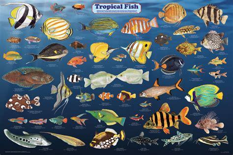 favorite tropical fish