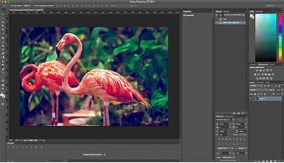Photoshop Tutorial Beginners Transform Flamingo Tricks Tips