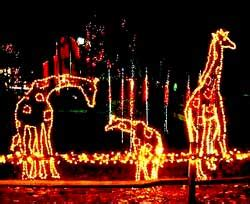 hogle zoo lights zoo lights reindeer parade utahagenda