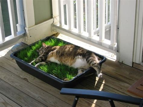 best 25 cat garden ideas on cat grass cat