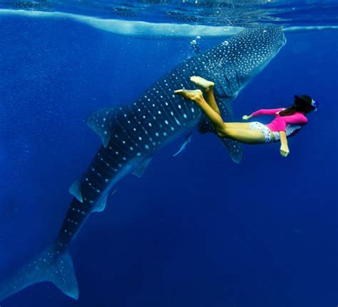 Dive With Whale Sharks Diving With Whale Sharks Dive The World Creature Features