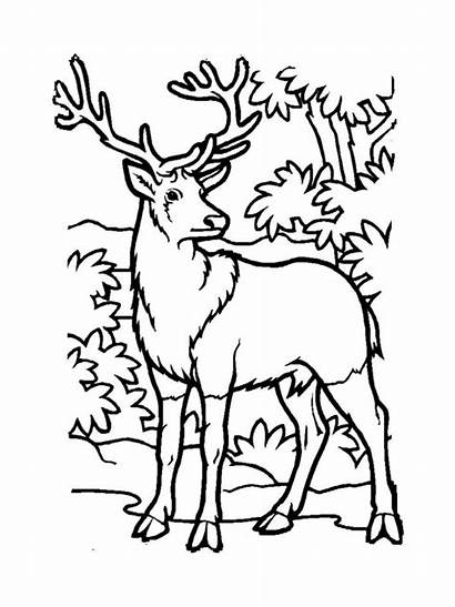 Deer Coloring Pages Printable Animal Animals Recommended