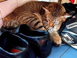funny, cats, sleeping, in, weird, places