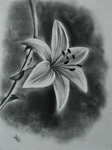 Gallery: Charcoal Drawing For Beginners, - Drawings Art ...