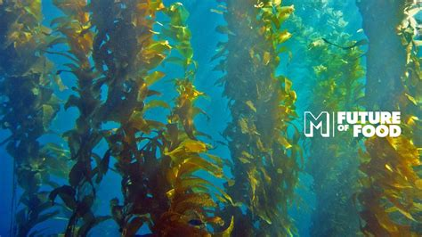 oceans  dying  kelp forests