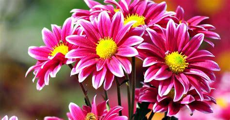 gambar bunga indah pertumbuhan zaman