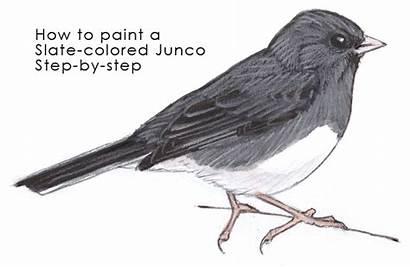 Step Junco Pencil Colored Sc Slate Paint