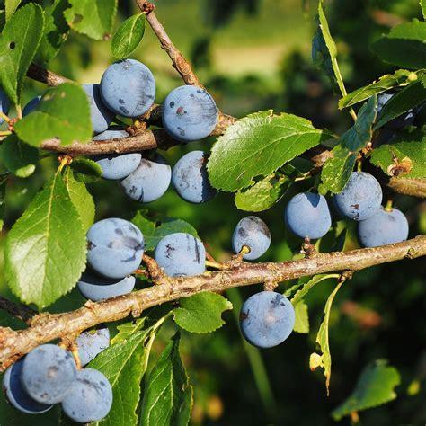 Was Essen Mäuse In Der Natur by Essen Aus Der Natur Beeren Sammeln Im Herbst