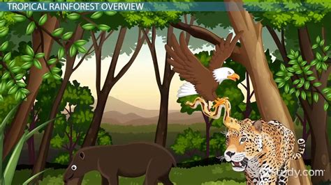 tropical rainforest animal adaptations video lesson