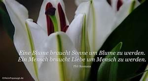 Liebe Ist Wie Eine Blume : eine blume braucht sonne um blume zu werden ein mensch braucht ~ Whattoseeinmadrid.com Haus und Dekorationen