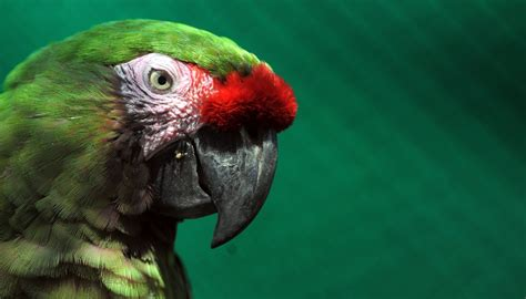 year  parrot head discovered  mexican burial