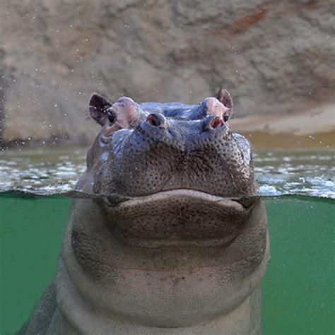 koelner zoo ausflugsziele koeln