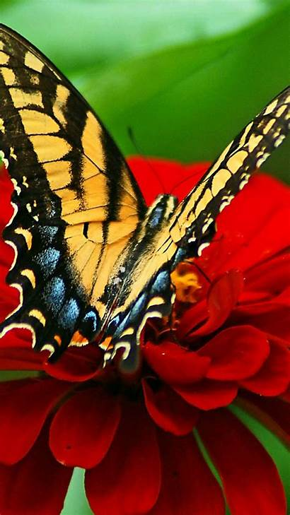 Butterfly Iphone Nature Yellow Wallpapers Backgrounds Flower