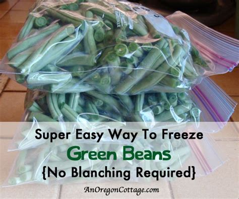 how to freeze string beans 36 recipes for preserving vegetables
