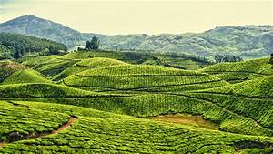 Beautiful Places in Kerala Pictures : Unforgettable ...