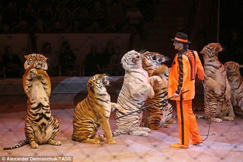 scotland bans   wild animals  travelling circuses