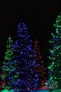 tree lights photograph by helen bobis