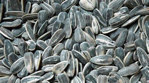 sunflower seed shells uses