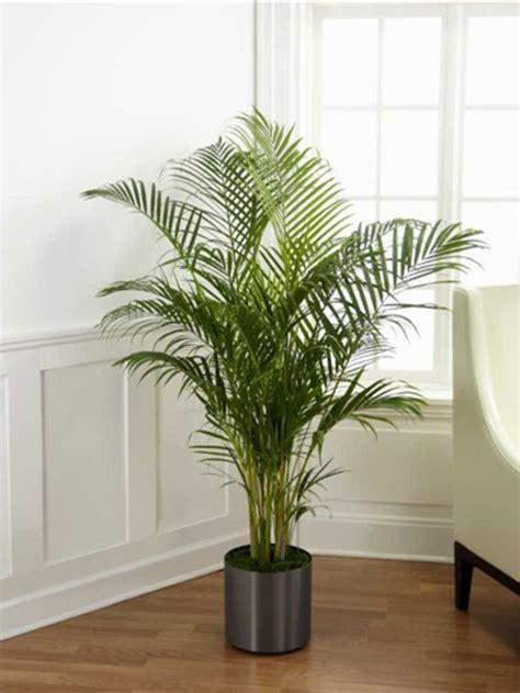 Große Pflanze Wohnzimmer by Palmenarten Zimmerpflanzen Wirken Sehr Sch 246 N Archzine Net