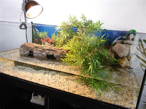 aquarium de tortue d eau franklin et aquarium galerie la tortue facile