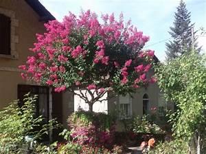 Taille Du Lilas Des Indes : lagestromia o lilas des indes le paradis d 39 une passionn e ~ Nature-et-papiers.com Idées de Décoration