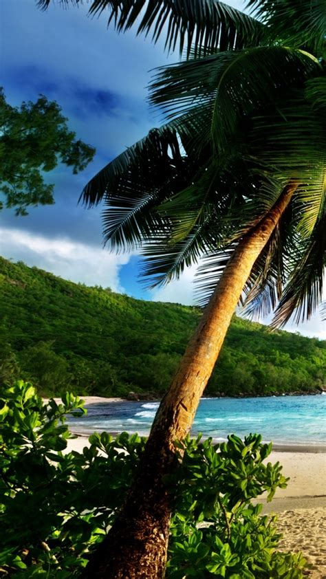 wallpaper thailand   wallpaper ocean shore palms