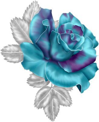 pin  ferize kepekci  guely flowers rose plants