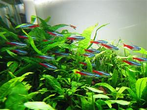Neon Tetras and the 20g long - YouTube