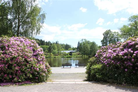 Botanischer Garten Kiel Braun by Sommerrodelbahn Sankt Andreasberg Reiselurch De