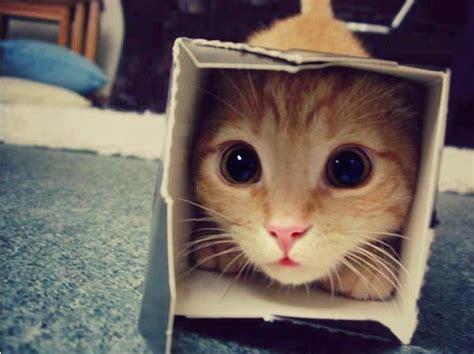 cute cat box aww cats eyes boxes random hi favim reddit kitten places funny s6 hiding hilarious examples most cuteness